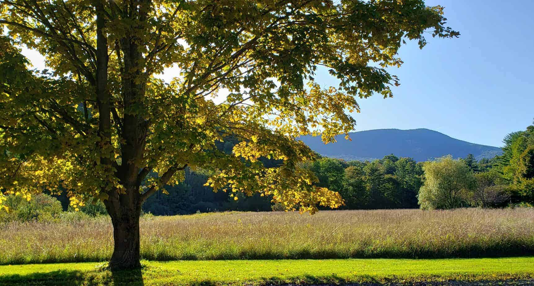 things to do in manchester VT header image - golden sun illuminates a green field with a distant mountain in the background and a leafy tree in front