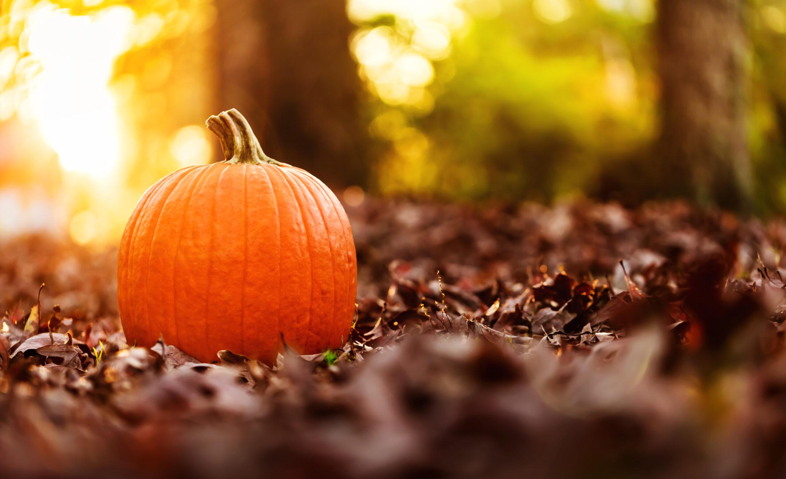 hocus pocus filming locations in salem ma - Big orange pumpkin with autumn leaves at sunset