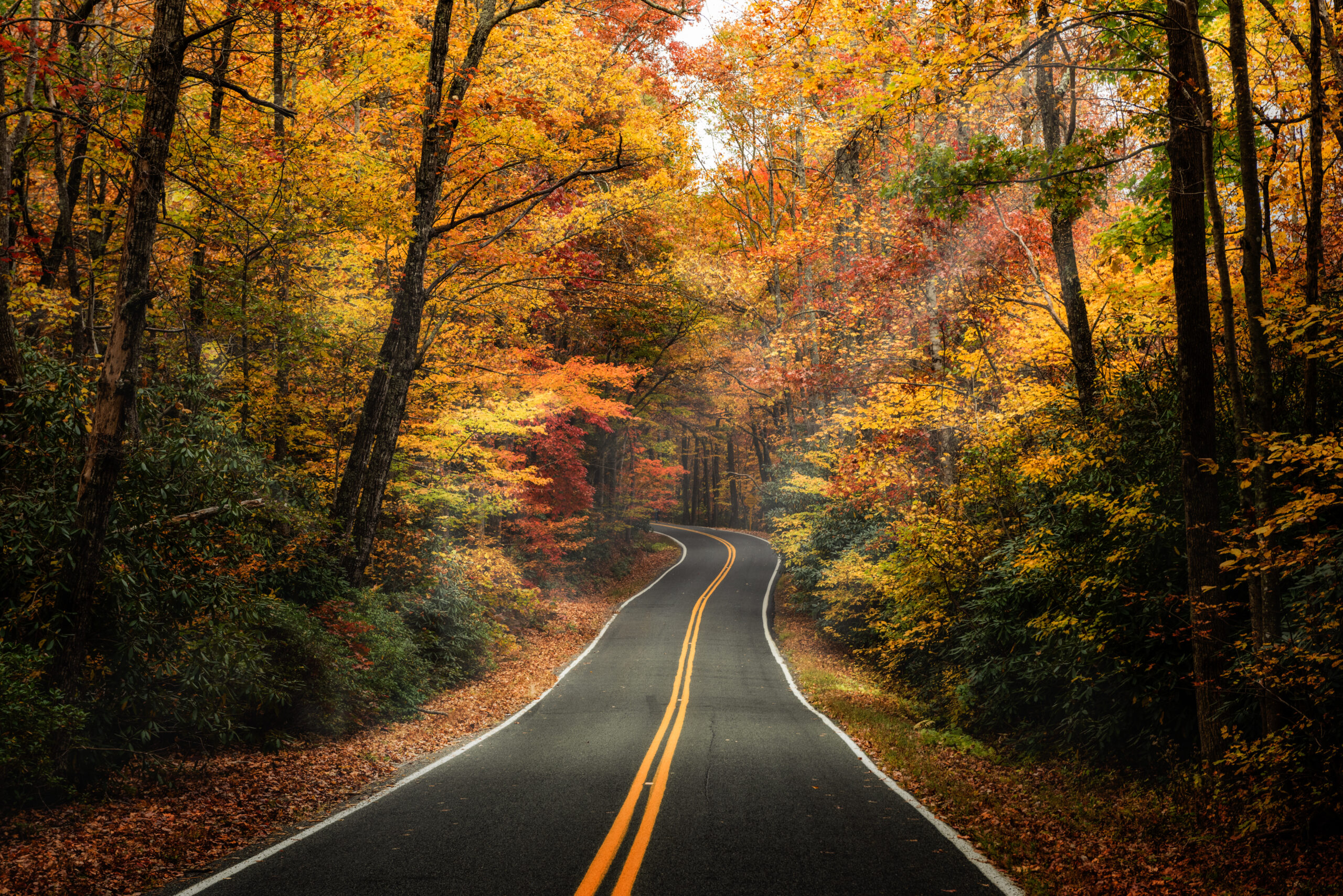 best new england fall foliage tours - image of empty road surrounded by autumn colored trees