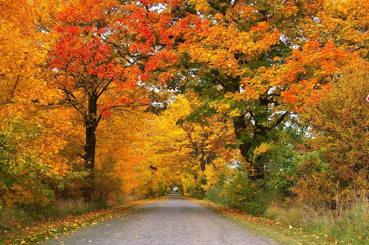 new england road trip itinerary - country road fringed by colorful fall foliage