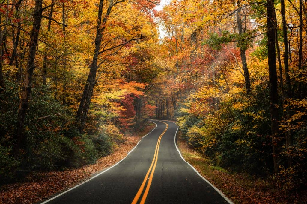 day trips from boston - image of new england road surrounded by autumn trees yellow and orange