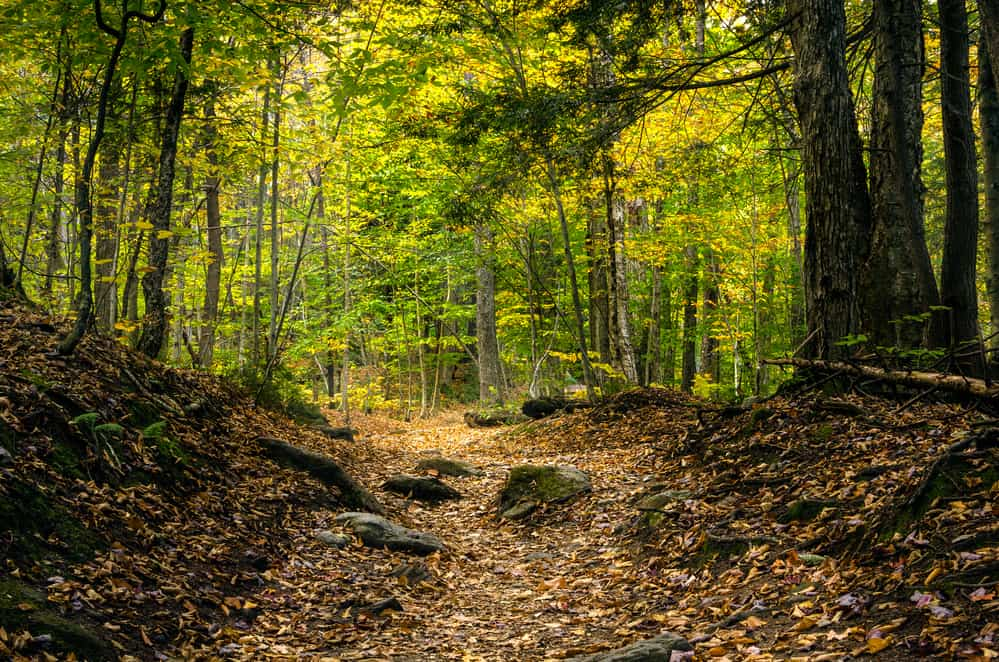 best hikes in Vermont - image of shady forest with rocky path, the trees are green and the path is brown and strewn with leaves