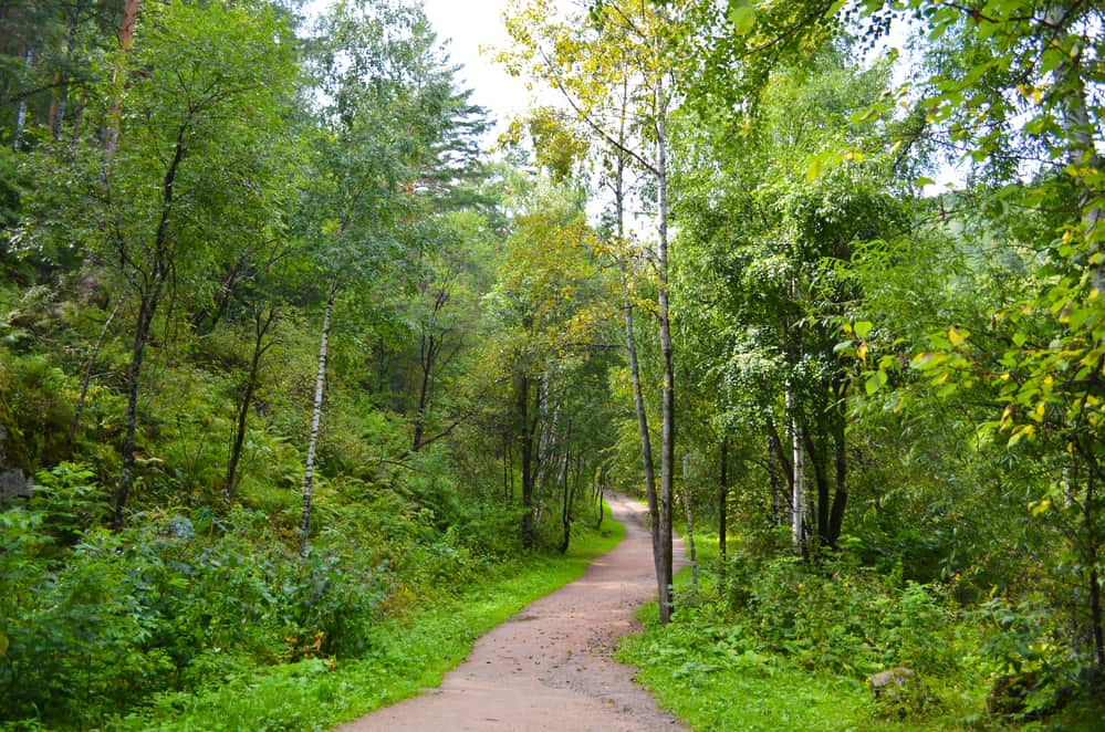 footpath in the forest, empty dirt path surrounded by green trees