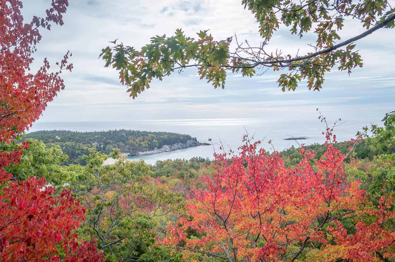 best time to visit acadia national park - inage of the atlantic ocean from atop a high hill. fall leaves frame the view