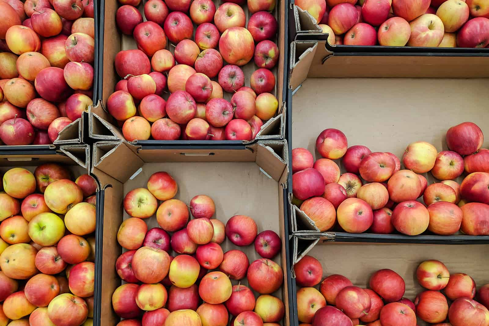 apple picking in CT - image of cardboard boxes from overhead filled with red and golden apples