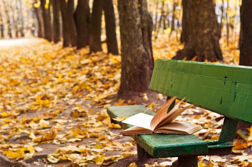 books set in new england - image of open book sitting on green bench in an autumn forest or park