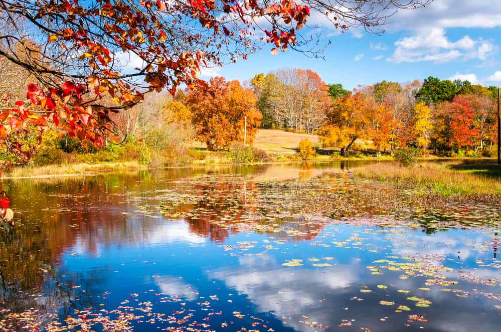 Beautiful autumn landscape on a sunny day. A pond is in foreground.