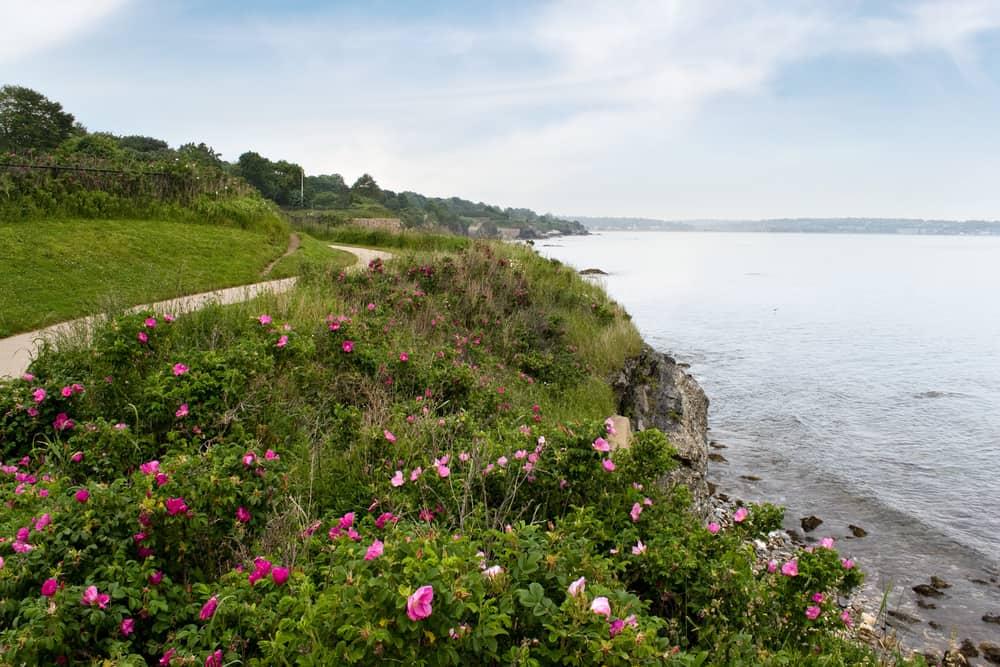 a coastal walk - newport ri cliff walk on a cloudy summer day