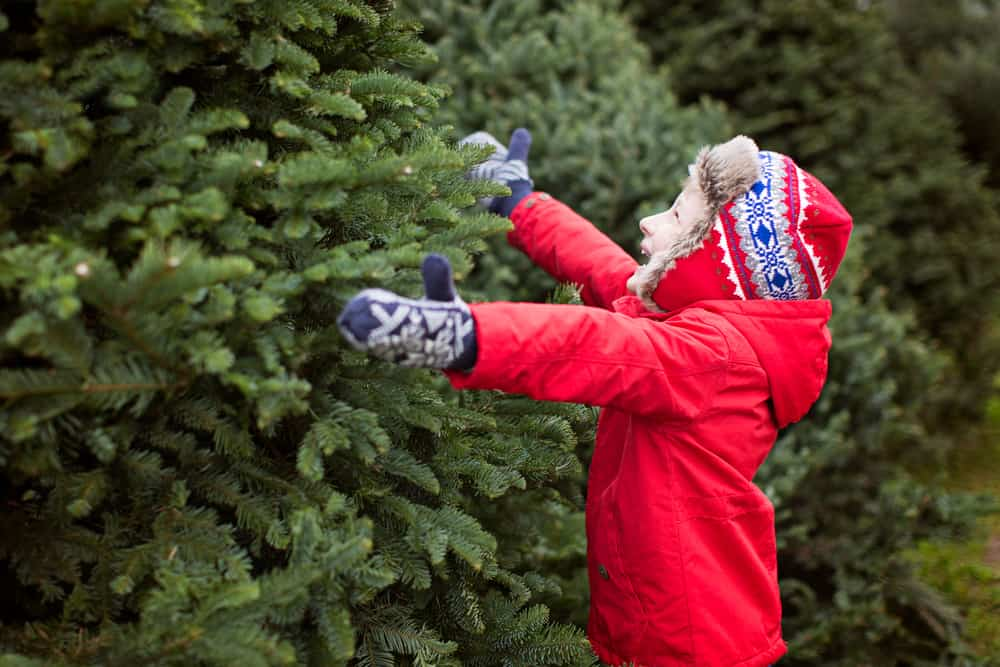 christmas tree farms in rhode island - excited little boy choosing christmas tree at the market, winter holiday concept