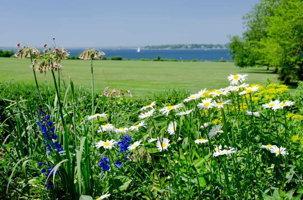 beautiful green field and ocean in the background with daisies in front - things to do in bristol rhode island
