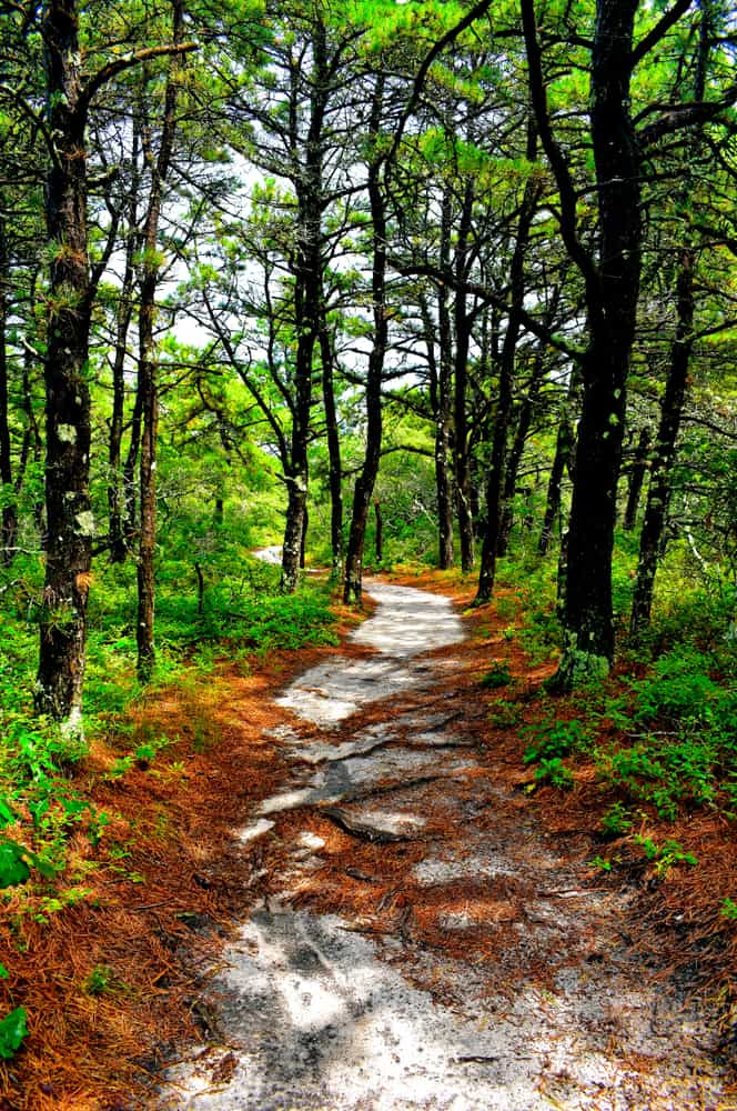 cape cod hike - a rocky path through bright green forest