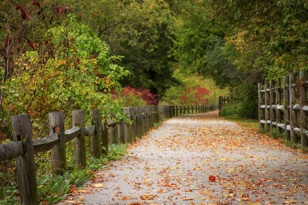 an empty bike path strewn with fall leaves
