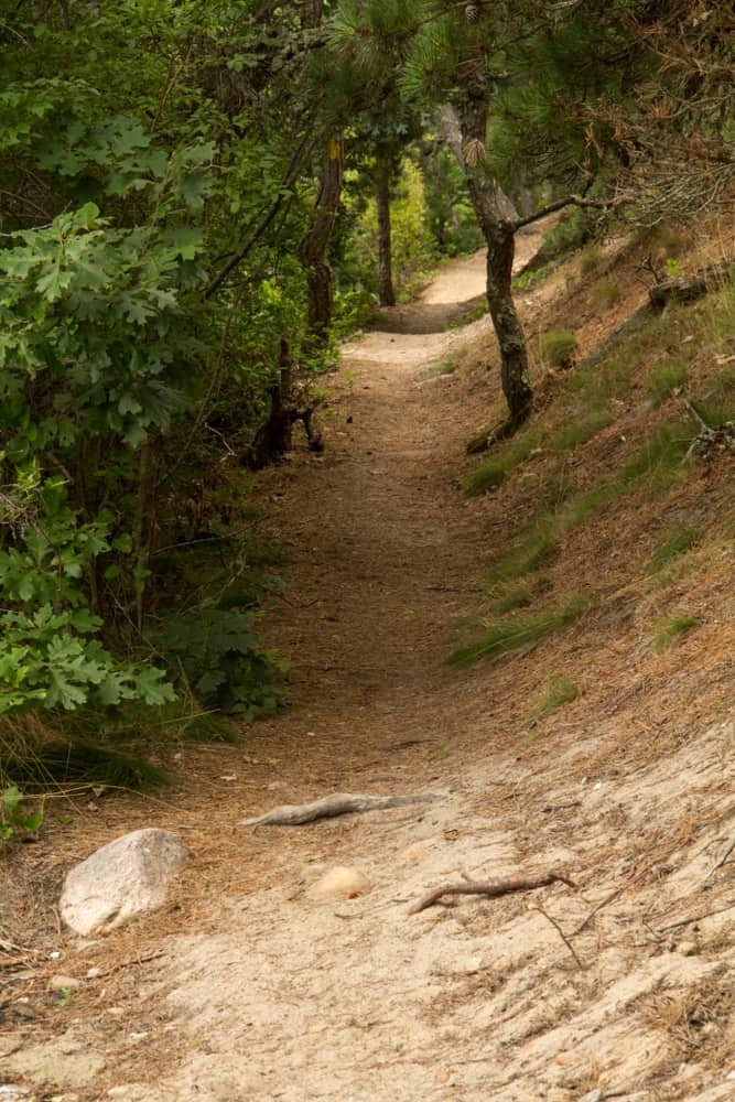 wooded dirt path under trees