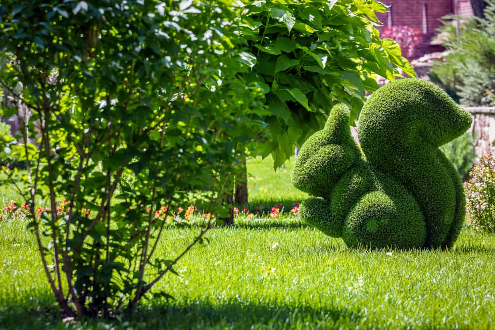 a green bush outdoors cut into the shape of a squirrel