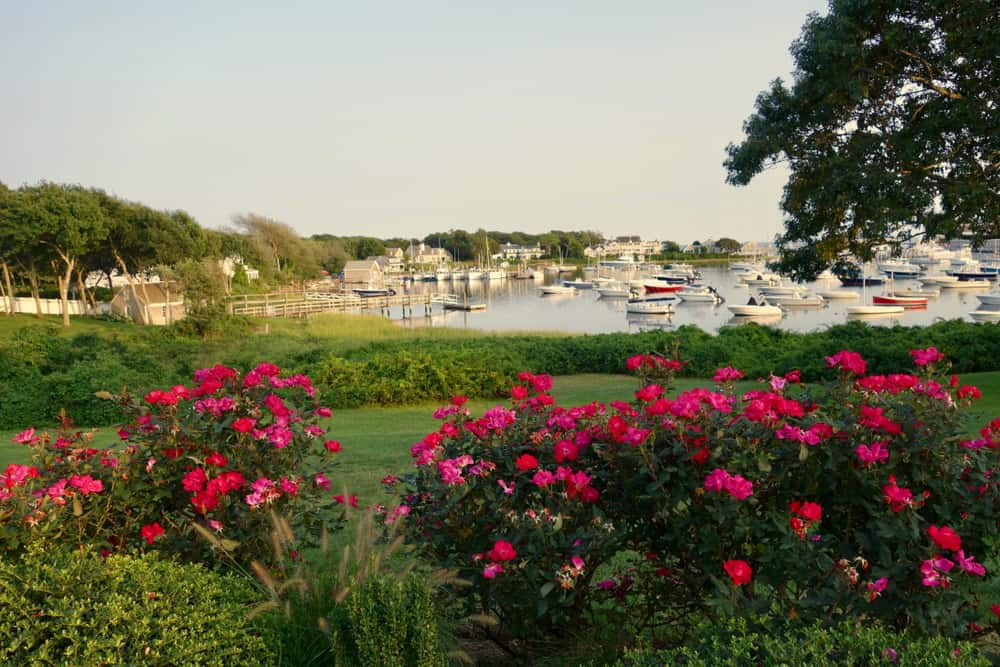 A view of a beautiful garden with pink flowers bordering a river with numerous speed-boats