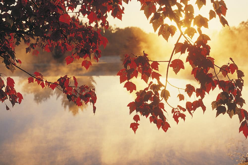 A picture of red fall leaves framing a river at dawn, one of the most beautiful places in CT