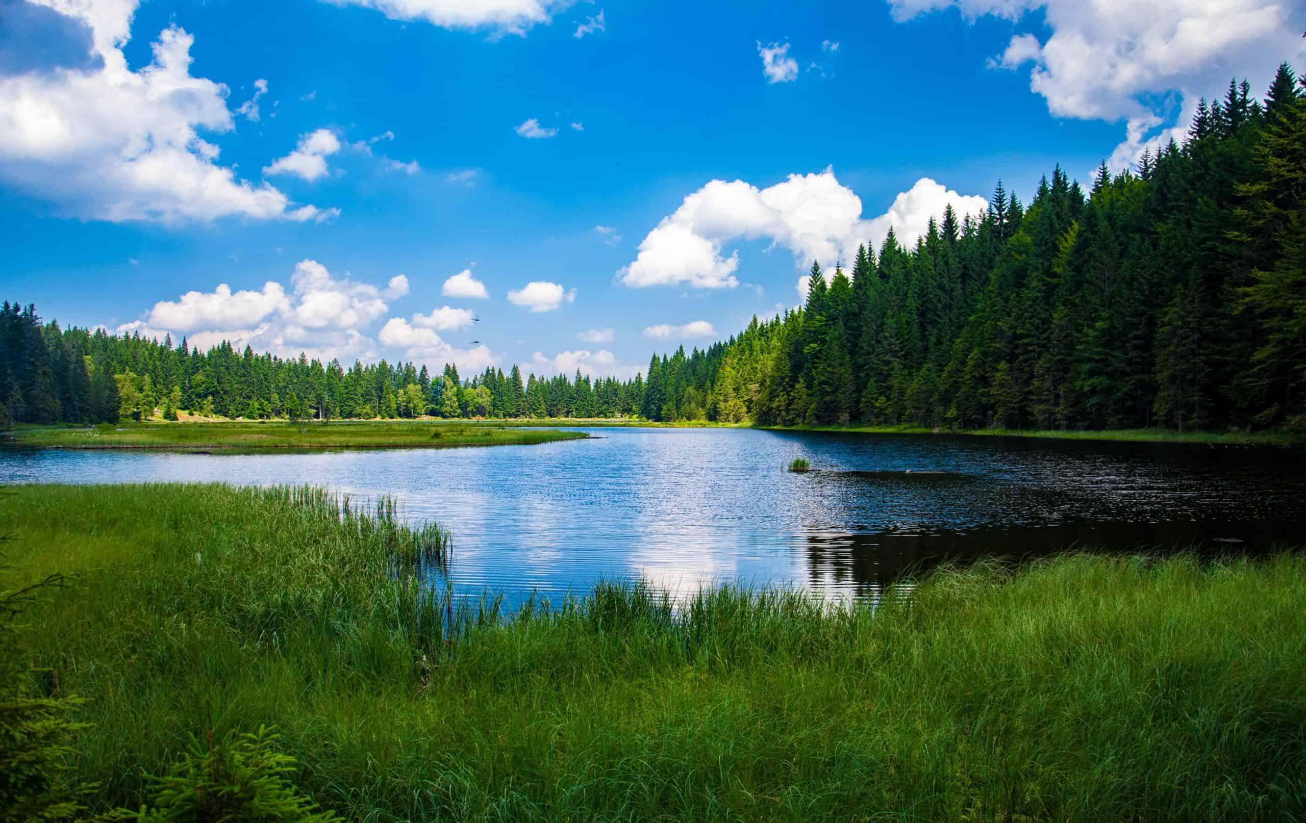 A stunning lake amidst greenery