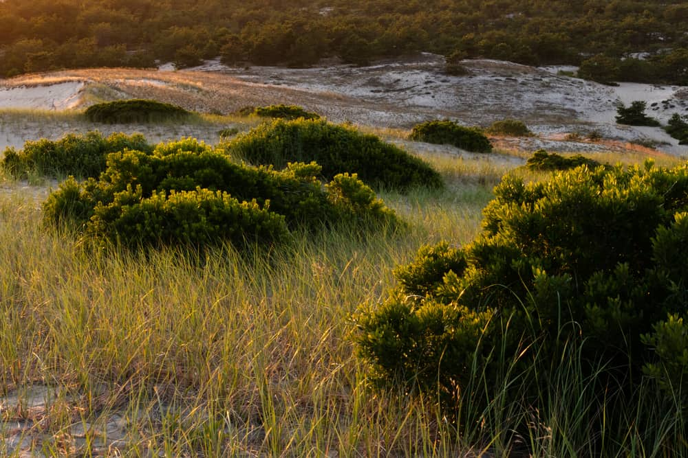 A picture of sandy dunes and grasses taken in Provincetown massachusetts