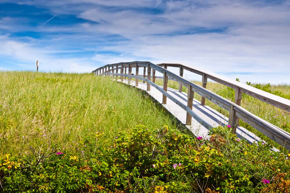 A view of a clear blue sky with a white bridge amidst grasses