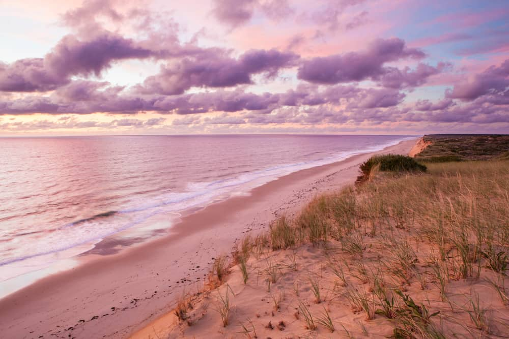 A view of grassy sea-shore in a cloudy day with a purple hued sunset ski