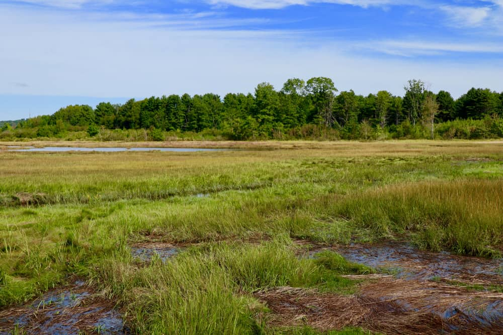green marsh with trees in the back