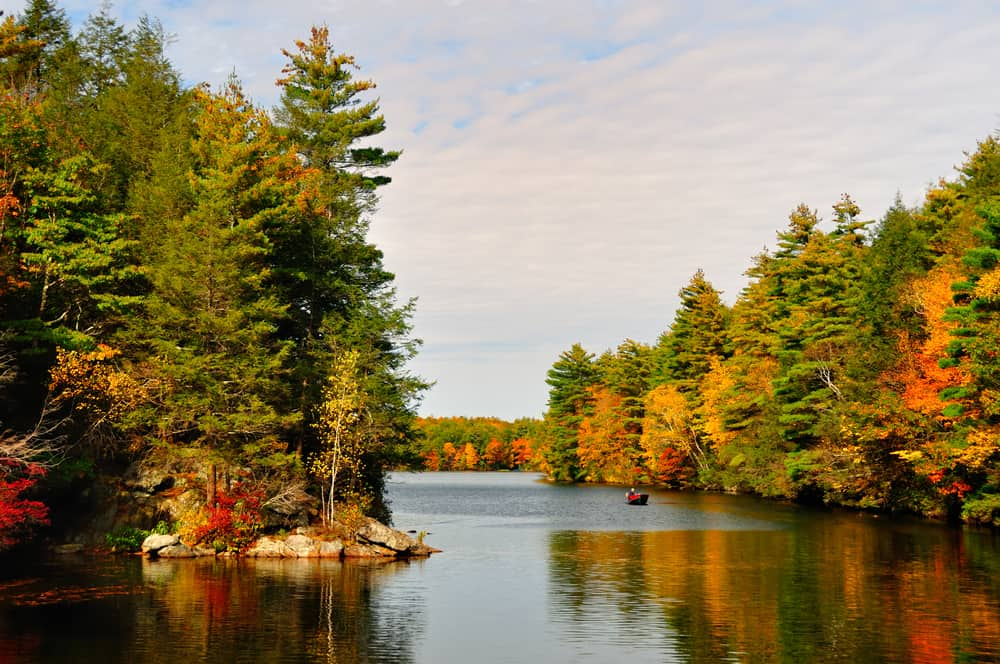 Calm river surrounded by a forest in the fall