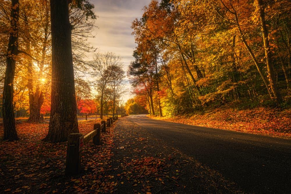 dusky dark fall road
