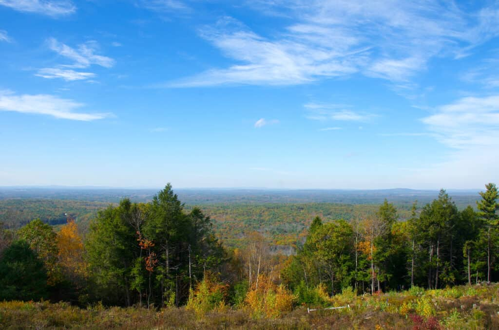 Trees in the fall with blue skies in Maine