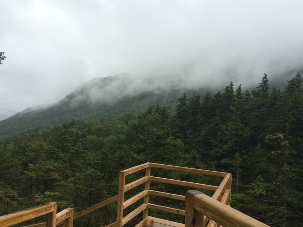 fog hovering low over deep green pine trees on hill, end of a wooden walkway seen in the foreground