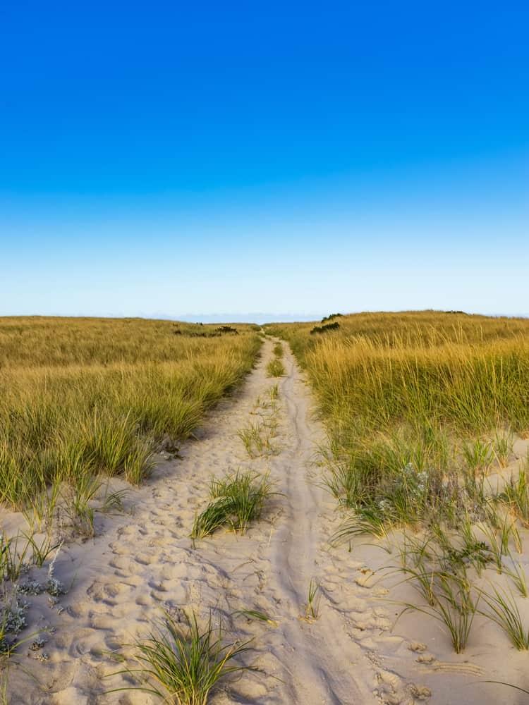 a grassy path over dunes, cape cod