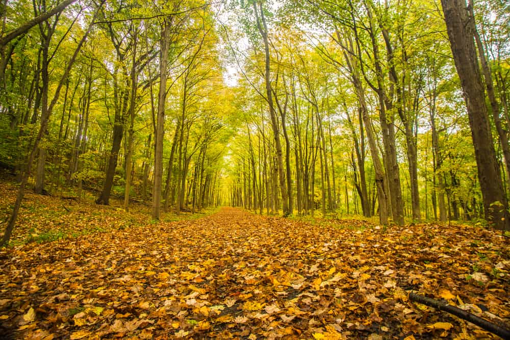 Autumn in a forest with tons of leaves on the ground