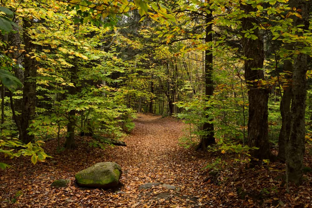 Hiking trail surrounded by fall foliage