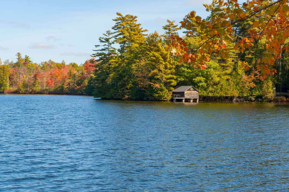 Serene lake with a tiny cabin surrounded by a forest.