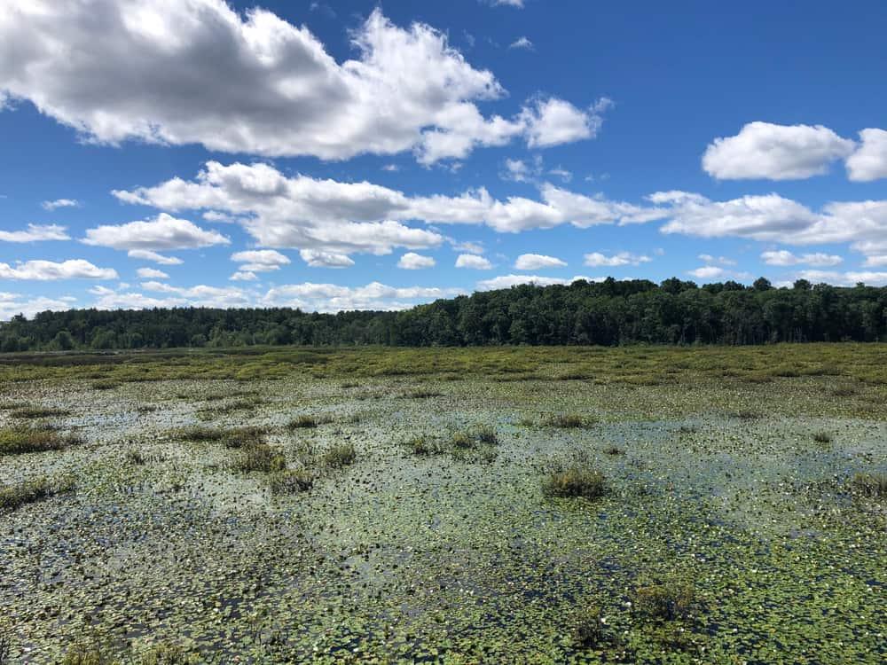 Water sanctuary under a blue sky