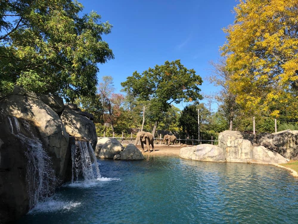 Blue waterfall exhibit with elephants