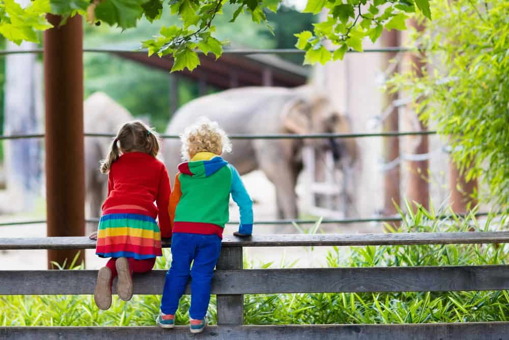 Two children leaning on a fence looking out at elephants