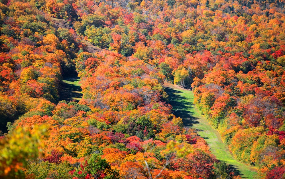Tons of trees during the fall with fall foliage