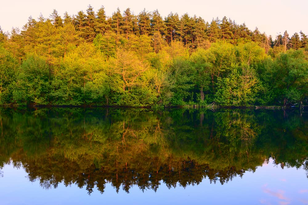 Peaceful lake with a forest reflecting on it, one of the beautiful lakes in Massachusetts.