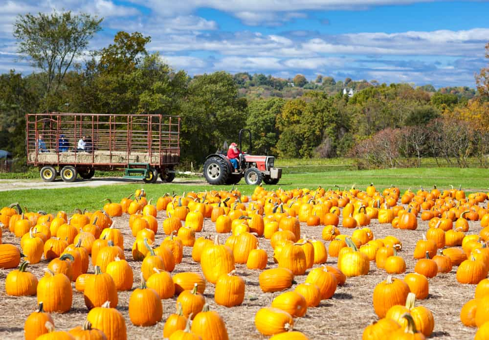 tractor pulling people on a hayride, best pumpkin patches in new hampshire