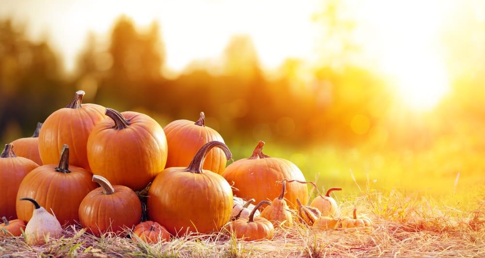 Pumpkins piled up on a farm, best pumpkin patches in rhode island