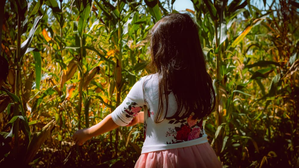 Girl standing in a corn maze