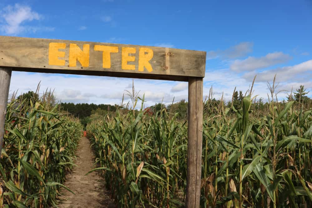 Corn maze with a sign that says enter