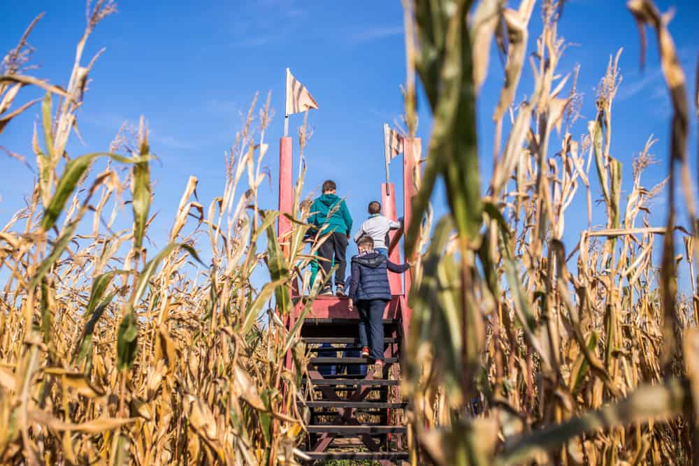 Family about to start a corn maze