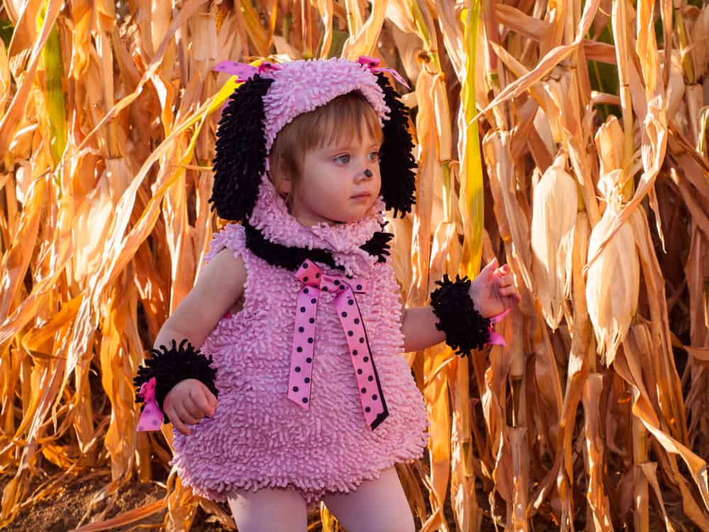 Girl in a poodle costume walking in a corn maze