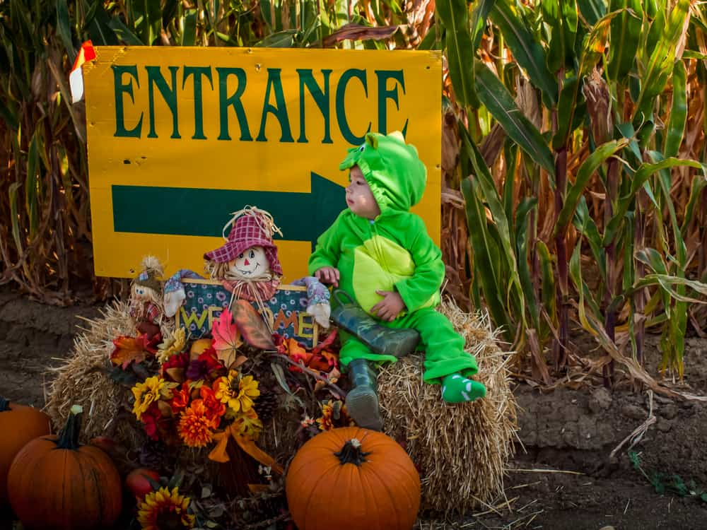 Child in a dino costume standing next to a corn maze