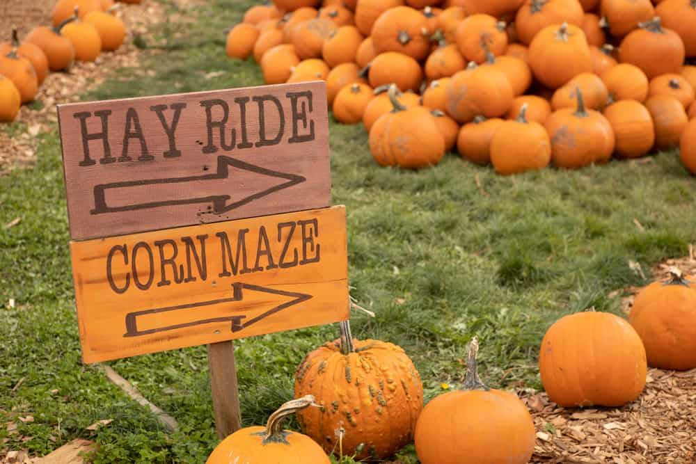 Sign that says hay ride and corn maze this way, best corn mazes in Maine