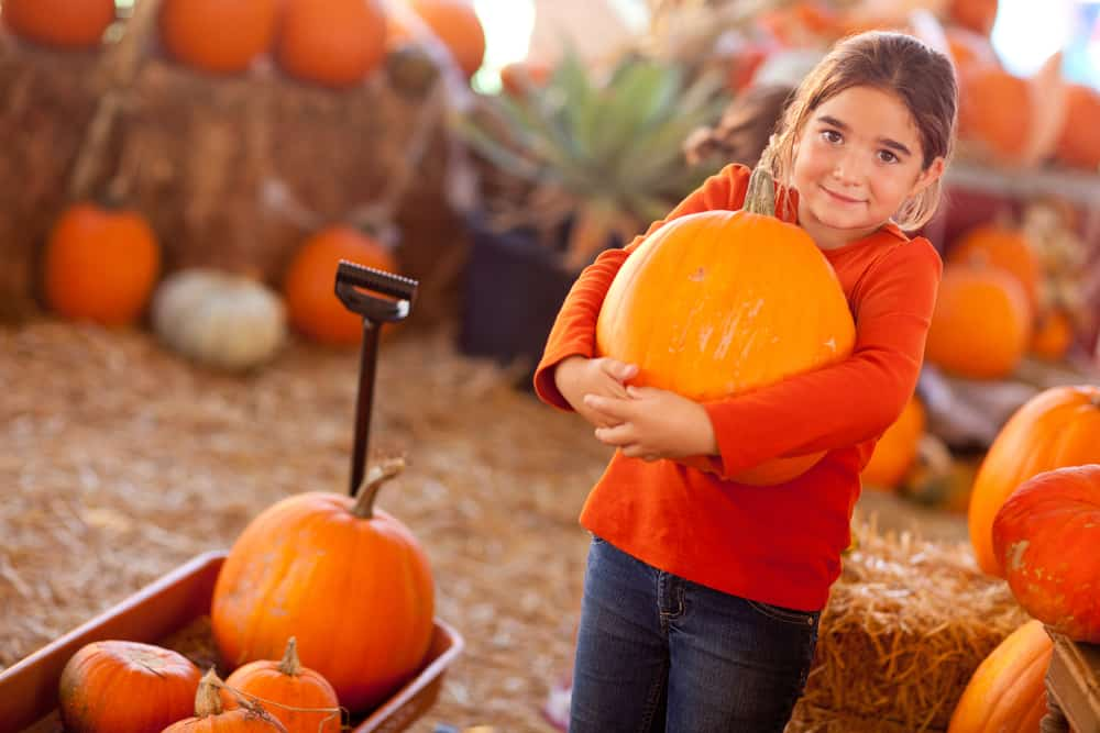 Child holding a giant pumpkin and smiling