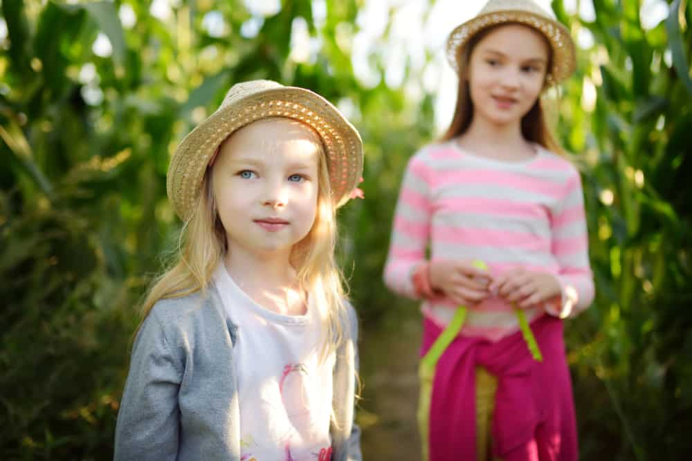 Two girls standing in a corn maze