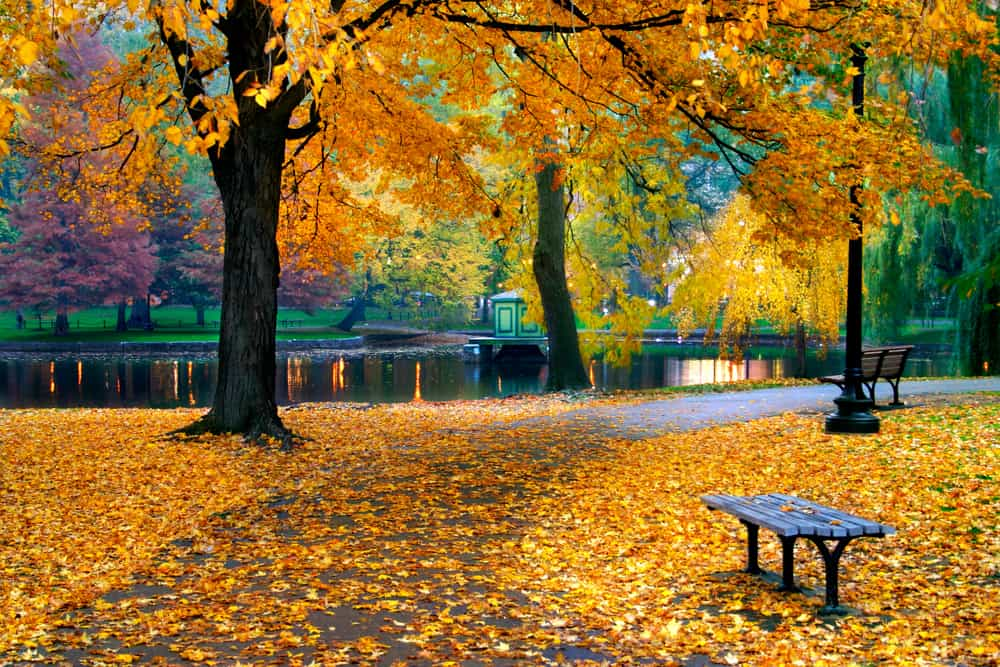 Public park next to a river in the fall