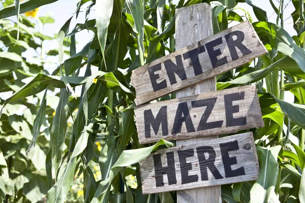 Sign that says enter maze here, corn mazes in new hampshire